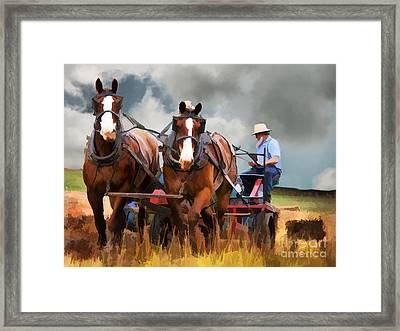 Amish Farmer Framed Print by Tom Griffithe