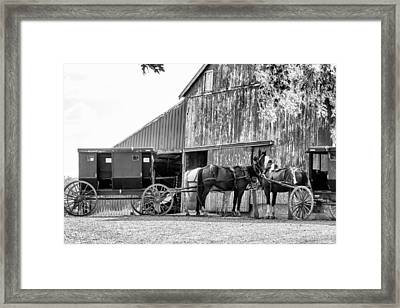 Amish Horse And Wagon Framed Print by Henry Fitzthum