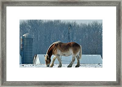 Amish Horse Framed Print by Maria Suhr