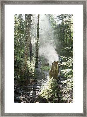 Ammonoosuc Ravine Trail - White Mountains New Hampshire Usa Framed Print by Erin Paul Donovan