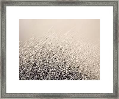 Ammophila Framed Print by Wim Lanclus