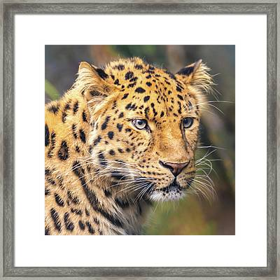 Amur Leopard Framed Print by Jim Hughes