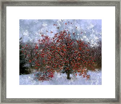 An Apple Of A Day Framed Print by Julie Lueders