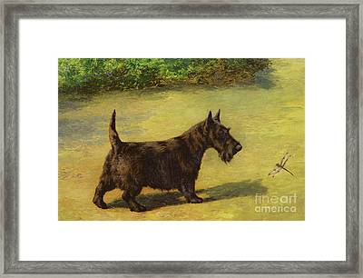 An Inquisitive Look Framed Print by Earl Maud
