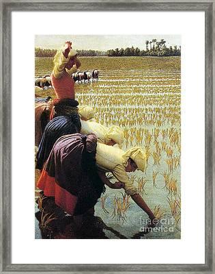 An Italian Rice Field Framed Print by Angelo Morbelli