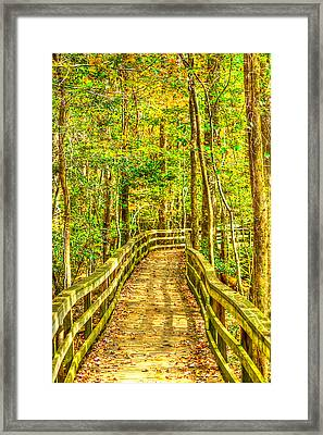 An Old Growth Bottomland Hardwood Forest Framed Print by Don Mercer