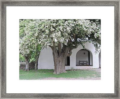 Anaqua Tree Framed Print by Lawrence Scott