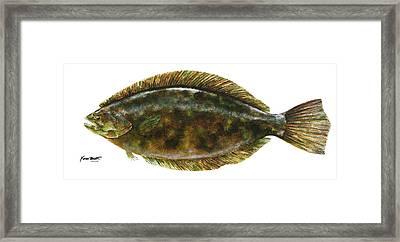 Anatomical Flounder Framed Print by Kevin Brant