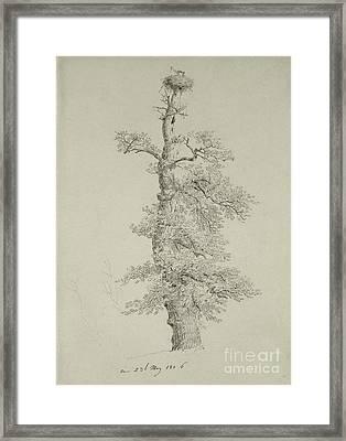 Ancient Oak Tree With A Storks Nest Framed Print by Caspar David