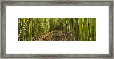 Ancient Passage Framed Print by Sun Gallery Photography Lewis Carlyle