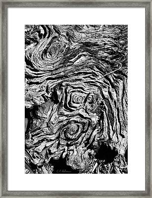 Ancient Stump Framed Print by Christopher Holmes