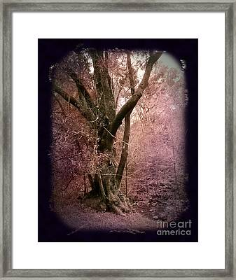 Ancient Tree By A Stream Framed Print by Laura Iverson