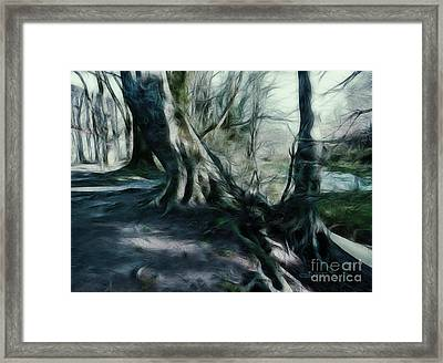 Ancient Tree Giants Framed Print by Jutta Maria Pusl