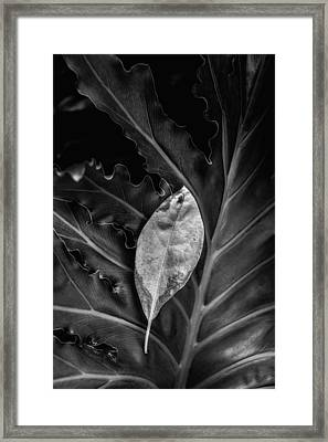 And I Will Catch You If You Fall Framed Print by Tom Mc Nemar
