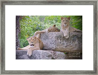 And The Living Is Easy Framed Print by Judy Kay