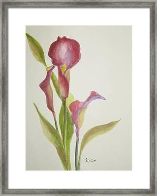 Andy's Calla Lillies Framed Print by Marsha Elliott