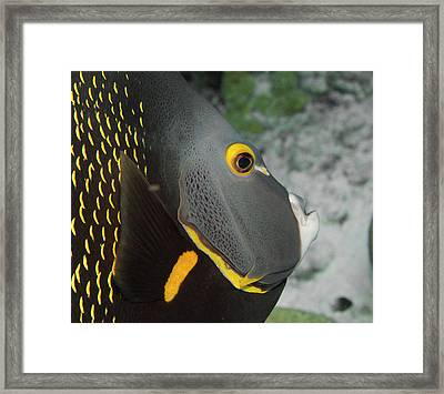 Angel Fish Profile Framed Print by Jean Noren