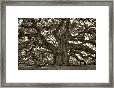 Angel Oak Live Oak Tree Framed Print by Dustin K Ryan