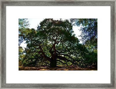 Angel Oak Tree 2004 Framed Print by Louis Dallara