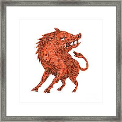 Angry Razorback Ready To Attack Drawing Framed Print by Aloysius Patrimonio