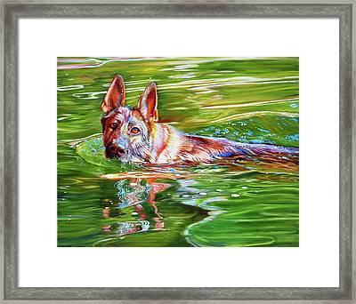 Angus Framed Print by Kelly McNeil