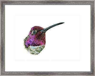 Anna's Hummingbird Framed Print by Logan Parsons