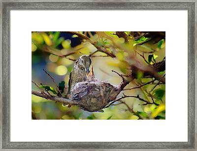 Anna's Hummingbirds 2 - Nest Framed Print by Nikolyn McDonald