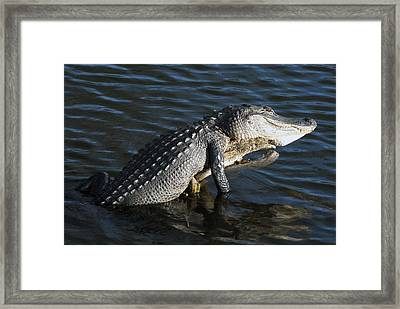 Another Day In Paradise Framed Print by W Scott Morrison