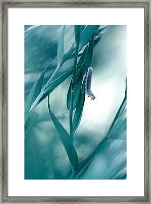 Another Stroll Framed Print by Fabien Bravin