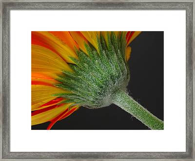 Another View Framed Print by Juergen Roth