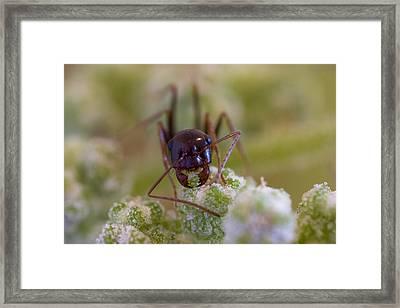 Ant Framed Print by Andre Goncalves
