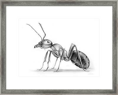 Ant Framed Print by Greg Joens