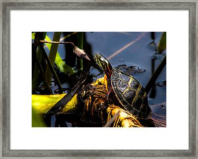 Ant Meets Turtle Framed Print by Bob Orsillo