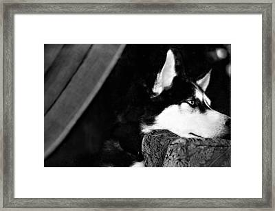 Anticipation Framed Print by Celestial  Blue
