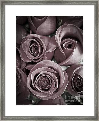 Antique Roses Framed Print by Edward Fielding