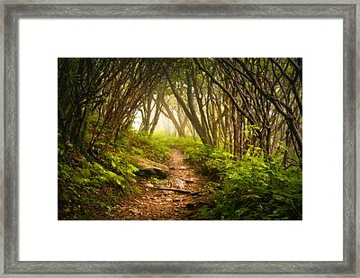 Appalachian Hiking Trail - Blue Ridge Mountains Forest Fog Nature Landscape Framed Print by Dave Allen