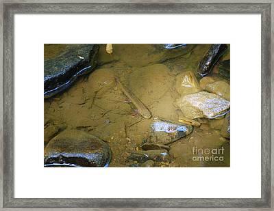 Appalachian  Native Framed Print by Randy Bodkins
