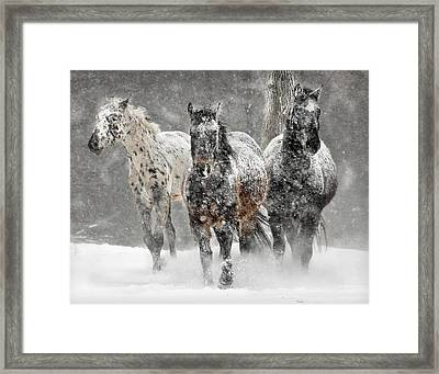 Appaloosa Winter Framed Print by Wade Aiken