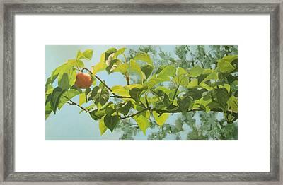 Apple A Day Framed Print by Karen Ilari