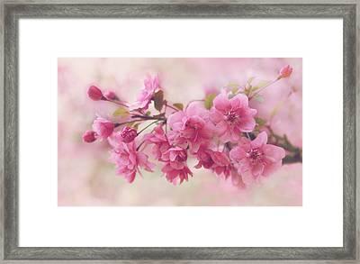 Apple Blossom Beauty Framed Print by Jessica Jenney