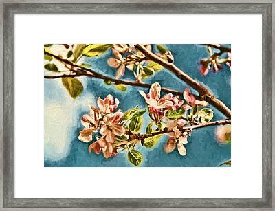 Apple Blossoms Framed Print by John K Woodruff