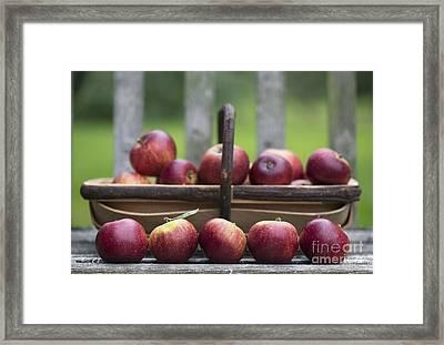 Apple Harvest  Framed Print by Tim Gainey