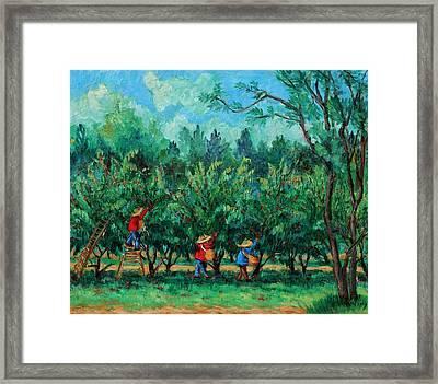 Apple Pickers  Littletree Orchard  Ithaca Ny Framed Print by Ethel Vrana