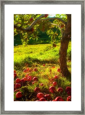 Apple Picking Framed Print by Joann Vitali