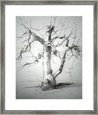 Apple Tree Framed Print by H James Hoff