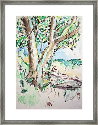 Apple Tree Framed Print by Rhonda Alexander
