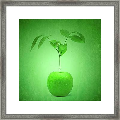 Apple Tree Framed Print by Wim Lanclus
