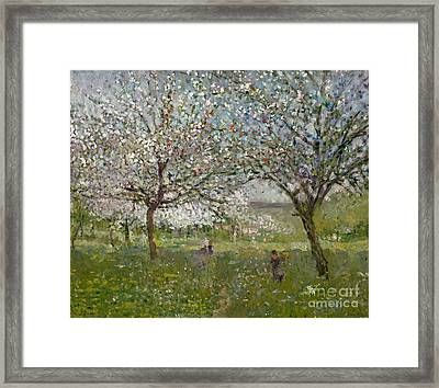Apple Trees In Flower Framed Print by Ernest Quost