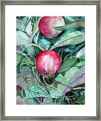 Apples Framed Print by Mindy Newman