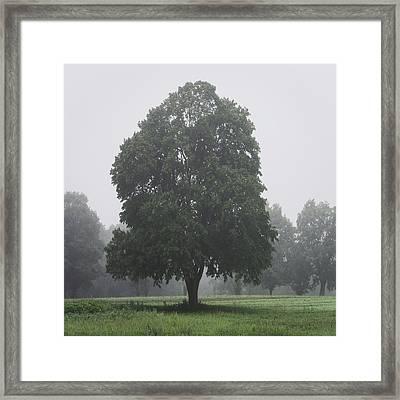 Appleton Tree Rainy Day Framed Print by David Stone
